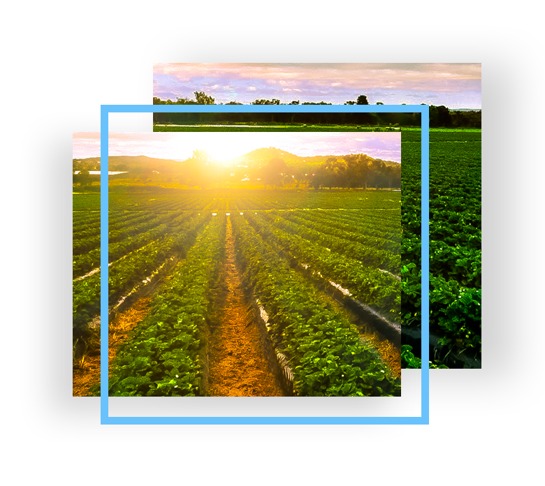 Providing the Agribusiness Industry with B2B Digital Marketing Solutions